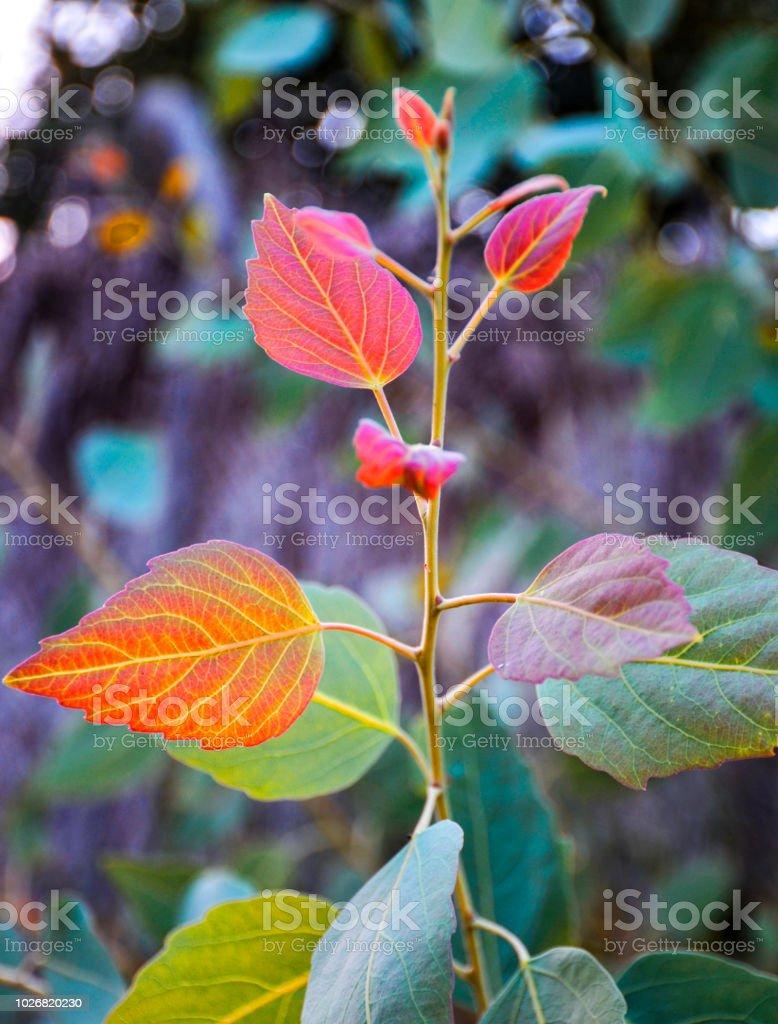 Tropical plants stock photo