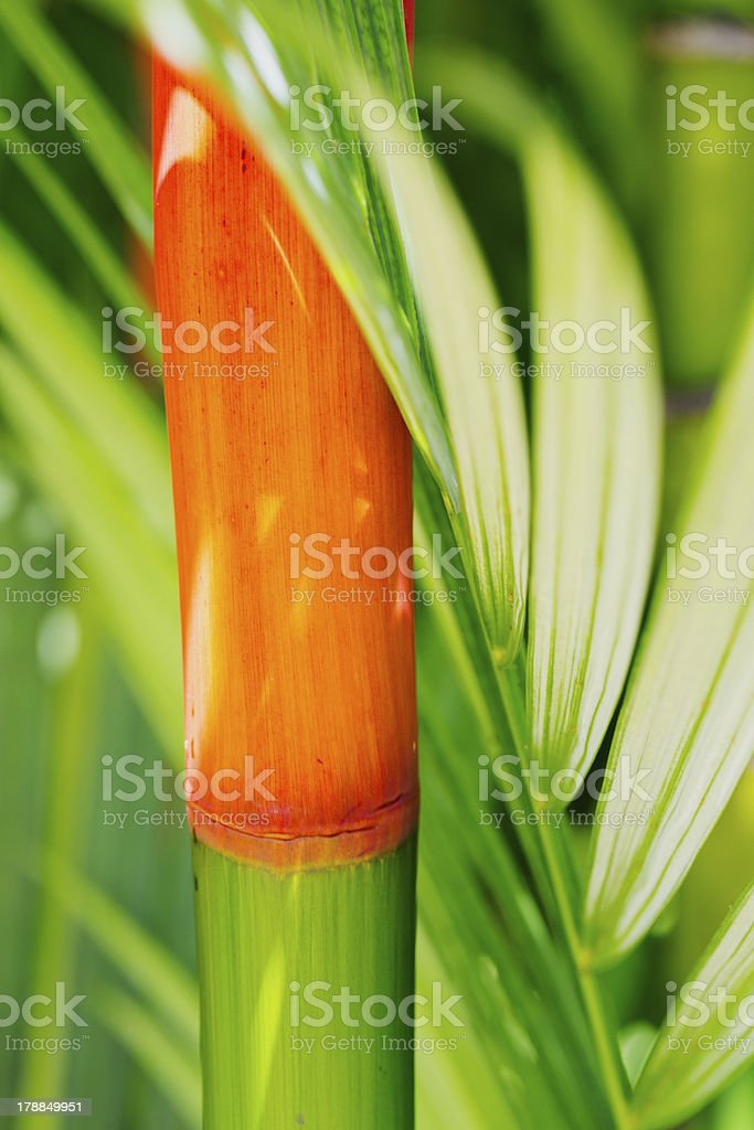 Tropical Plants royalty-free stock photo