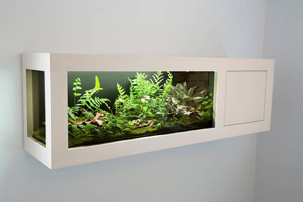 tropische pflanzen - terrarienpflanzen stock-fotos und bilder