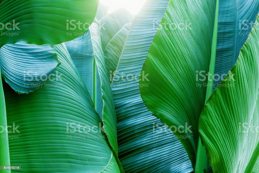 南国の植物 ストックフォト