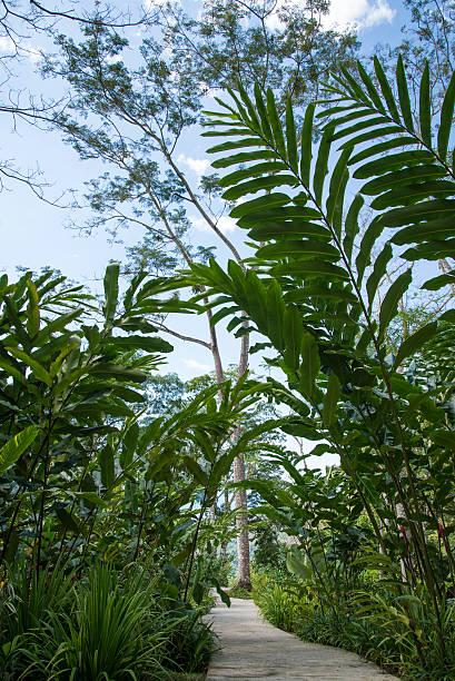 tropical plants walkway costa rica puntarenas stock photo