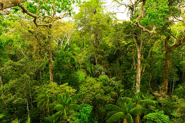 Tropical pristine rainforest Pristine forest in the tropics island of borneo stock pictures, royalty-free photos & images