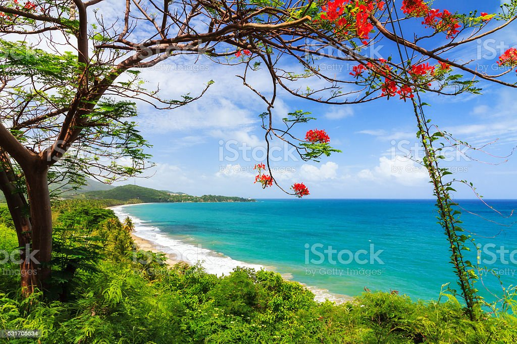 Tropical Puerto Rico stock photo