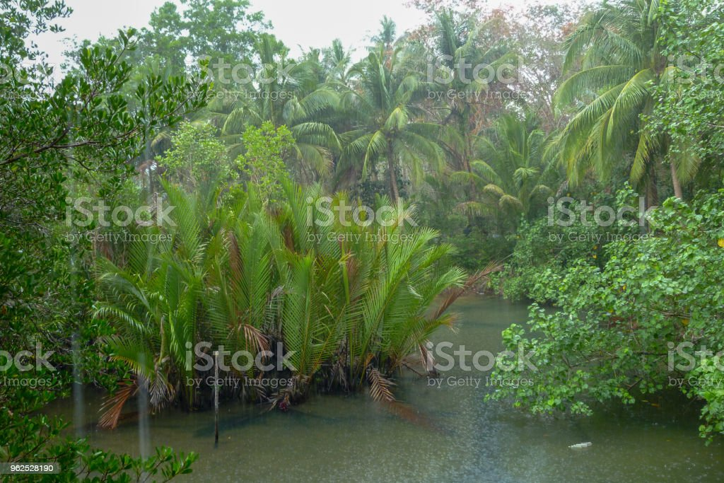 Chuva tropical acima do rio que atravessa a floresta tropical - Foto de stock de Beleza royalty-free