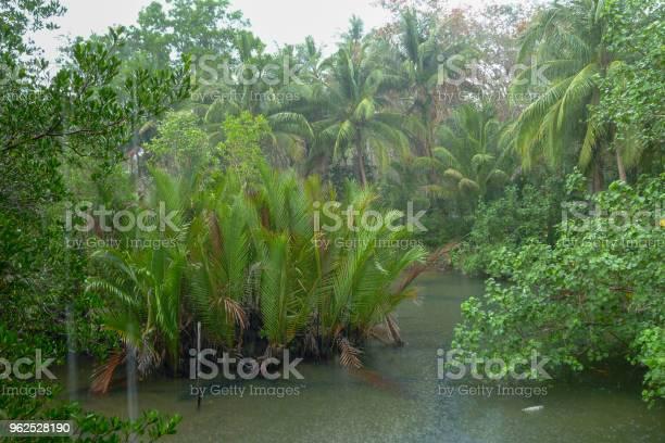 Foto de Chuva Tropical Acima Do Rio Que Atravessa A Floresta Tropical e mais fotos de stock de Beleza