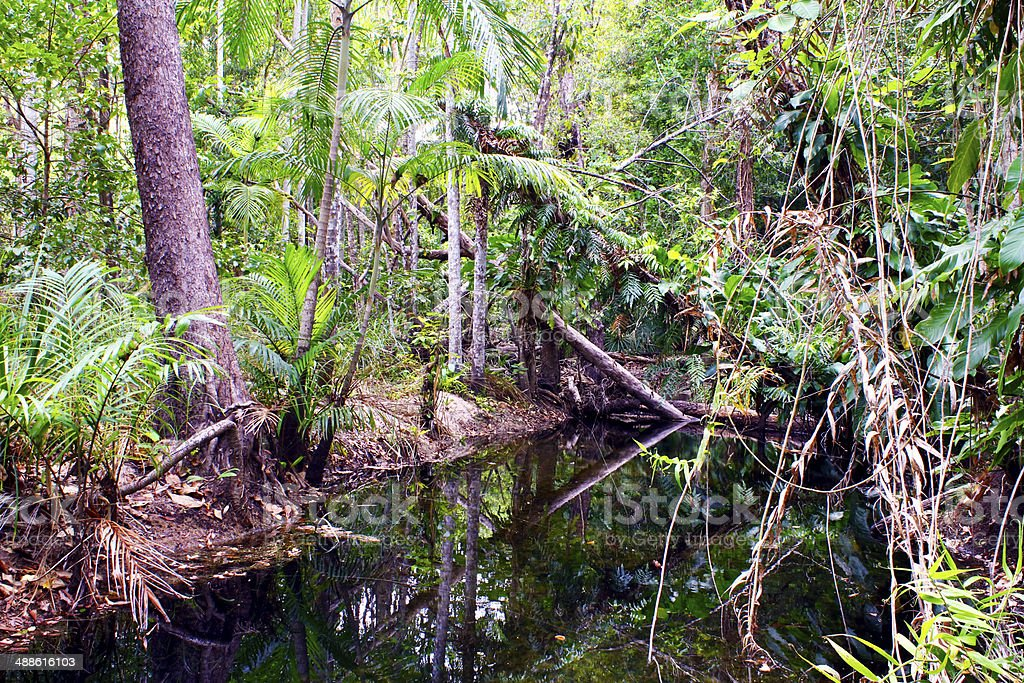 Tropical Rain forest in Australia stock photo