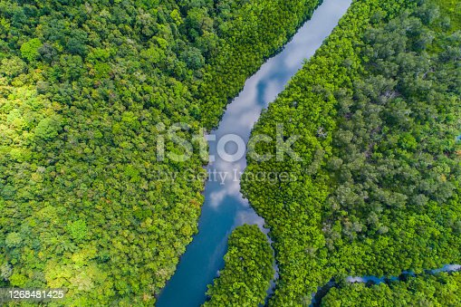 Tropical rain forest mangrove river and green tree on island aerial view