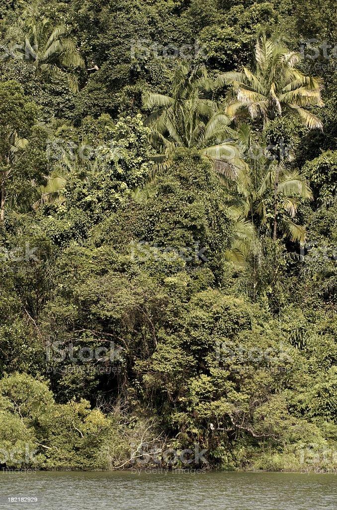 Tropical rain forest stock photo