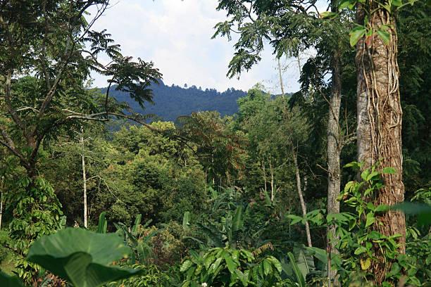 Tropical rain forest picture id90968478?b=1&k=6&m=90968478&s=612x612&w=0&h=rsrw1e2wlkjrj4wy5orjxcwufwghswsycj9jipccs6s=
