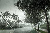 Tropical torrential rain in Miami Beach.