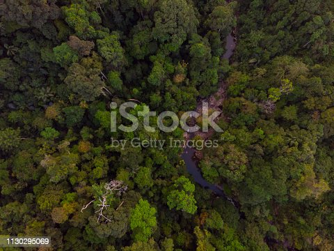 istock Tropical rainforest aerial view 1130295069