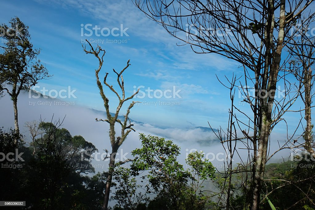 Tropical Rainforest Chong Yen, Mae-wong Nation park in Thailand royalty-free stock photo