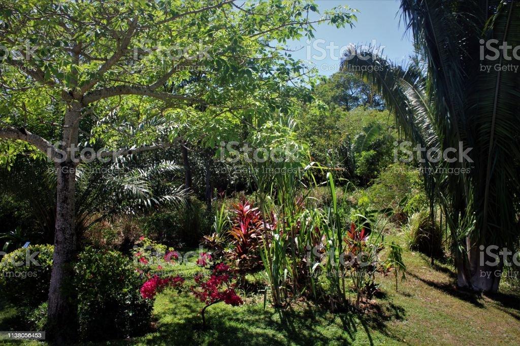 Tropical Rainforest Garden Stock Photo Download Image Now Istock