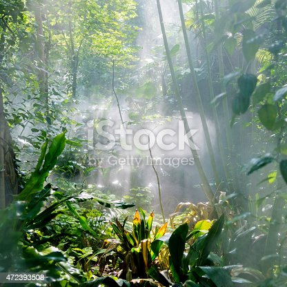 Tropical rainforest in the sunlight.
