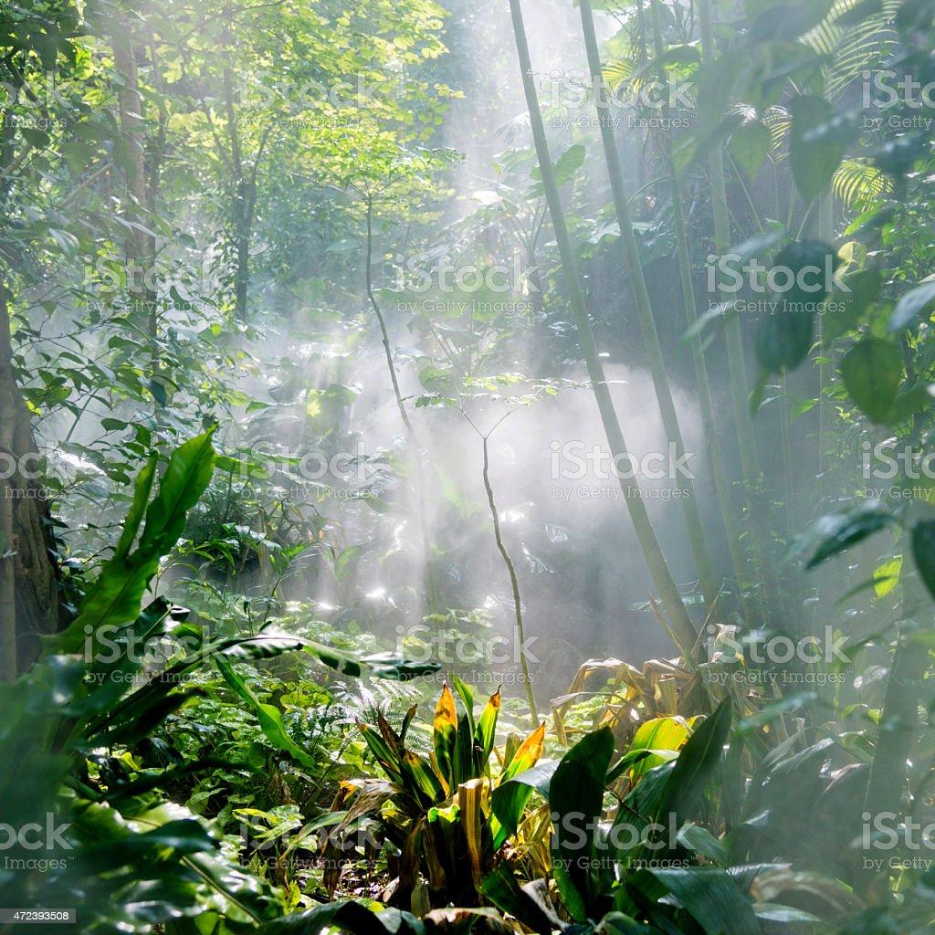Tropical rainforest in sunlight stock photo