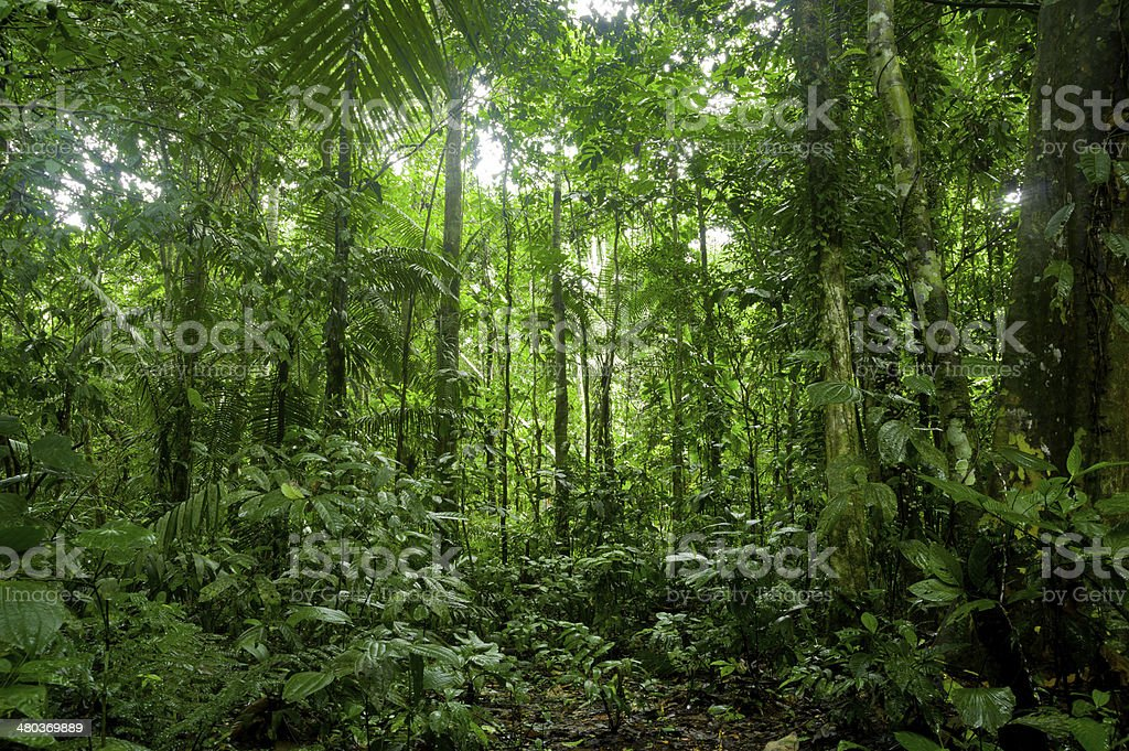 Tropical Rainforest Landscape, Amazon stock photo