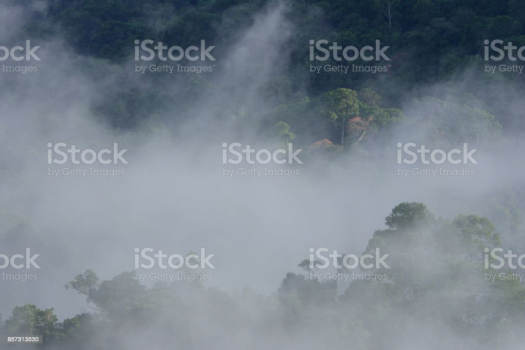 tropical rainforest landscape in the morning mist stock photo
