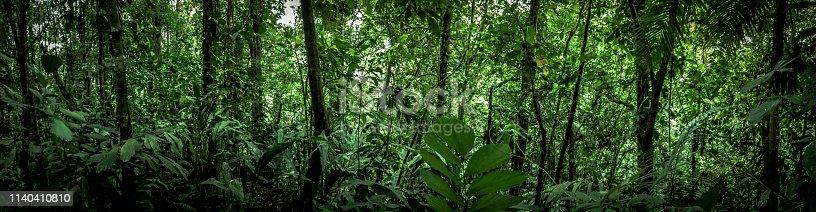 beautiful panoramic shot of the tropical rainforest in costa rica, latin america.