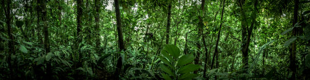 tropical rainforest panoram view, costa rica, latin america stock photo