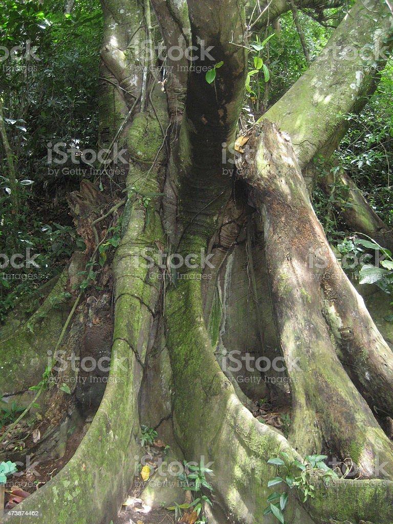Tropical Rainforest Pico Bonito National Park La Ceiba Atlantida Honduras stock photo