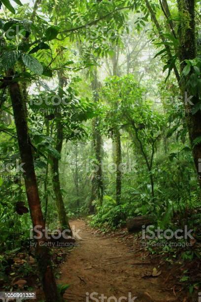 Bosque Humedo Tropical Foto De Stock Y Mas Banco De Imagenes De Aire Libre Istock