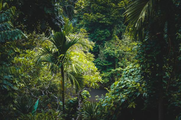 Tropical rainforest stock photo