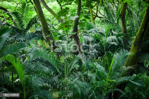 Vertical Shot of a tropical rainforest in Singapore.
