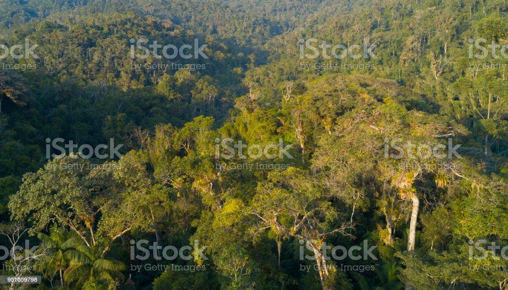 Floresta Tropical - foto de acervo