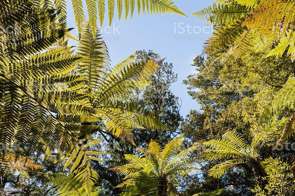 tropical rainforest tree canopy against blue sky stock photo