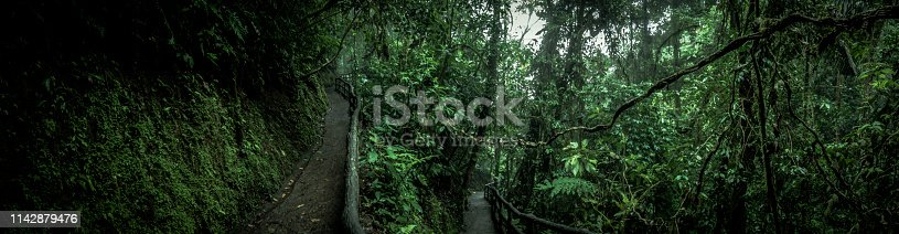 beautiful panoramic shot of a manmade walkway at the tropical rainforest in costa rica, latin america.