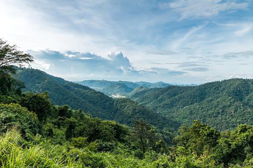 tropical rainforest,Khao Yai National Park Thailand.