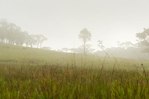 tropical rainforest,Laos