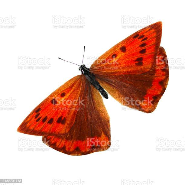 Tropical red butterfly isolated on white background picture id1132731748?b=1&k=6&m=1132731748&s=612x612&h=s mzeigthjeh7pf5chlai 3qswdhlpicte ufpfyhb8=