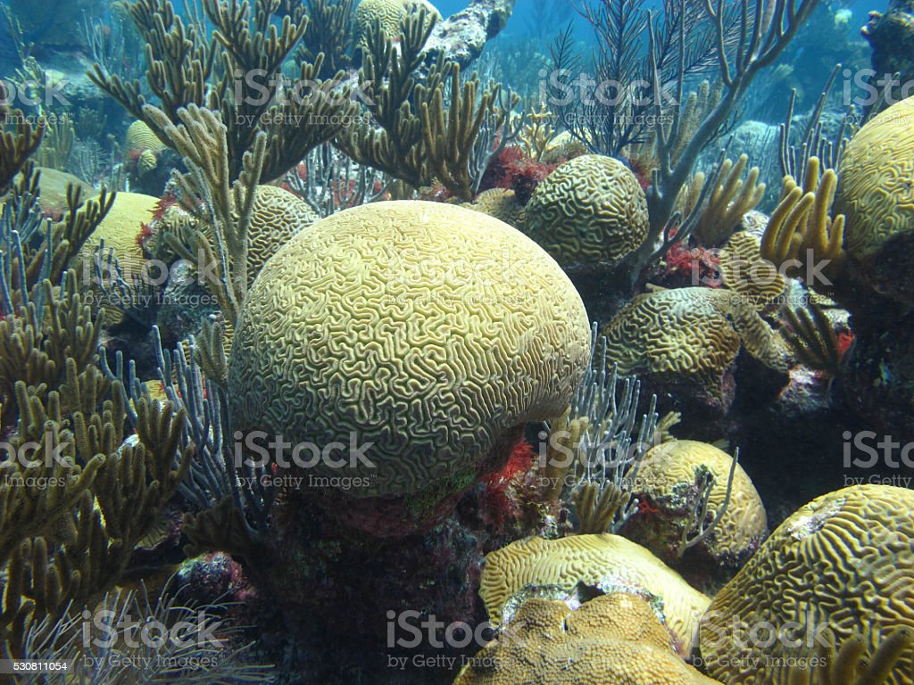 Tropical Reef, Bermuda stock photo