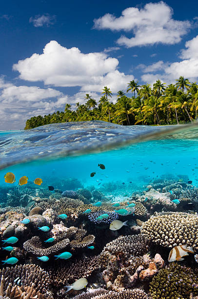 tropical reef - cook islands - south pacific - pacific islands stock pictures, royalty-free photos & images