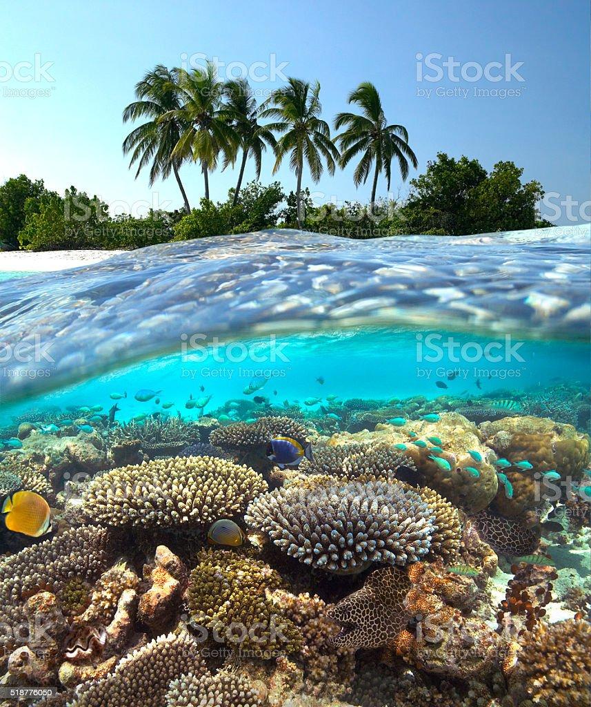 Tropical Reef - Maldives stock photo
