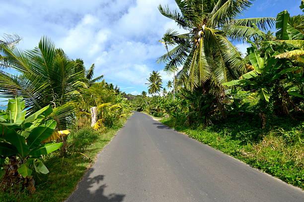 Tropikalny road – zdjęcie
