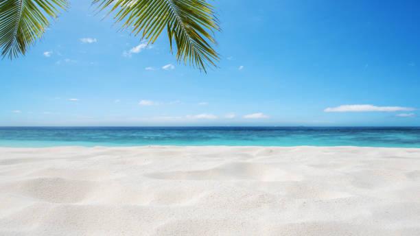 Tropical sandy beach background stock photo