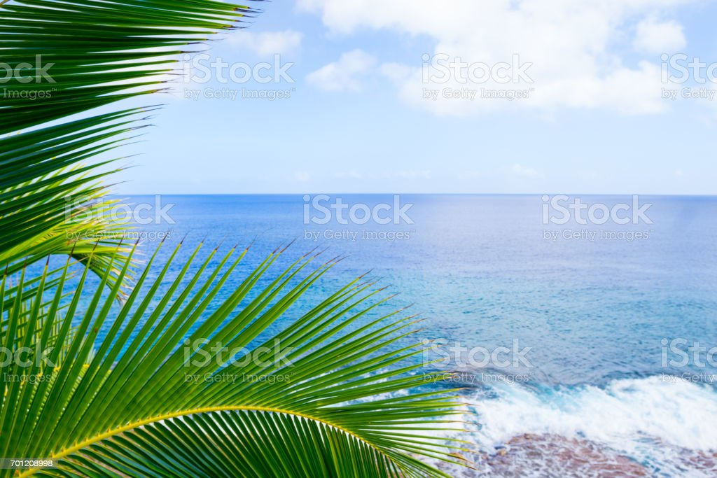 Tropical scene palm trees and fronds swaying in breeze over ocean  distant horizon and sky. stock photo