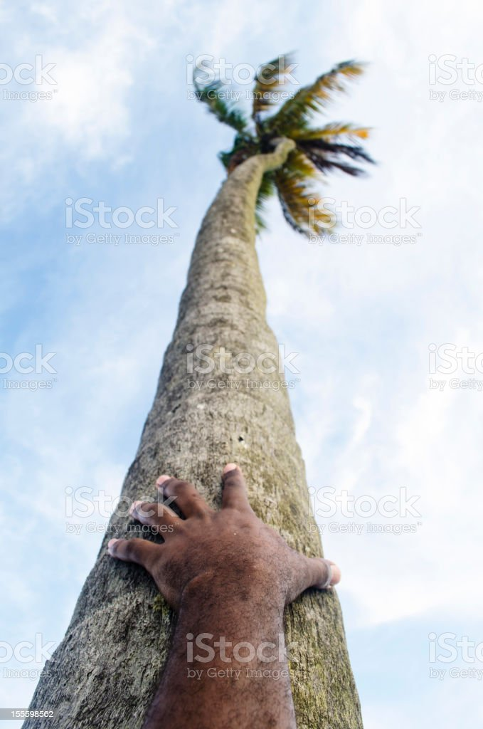 tropical scene with hand on coconut palm tree trunk royalty-free stock photo