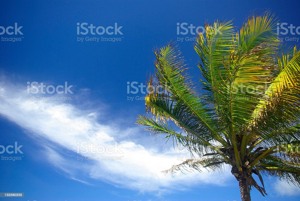 tropical scene with palm tree and blue sky royalty-free stock photo