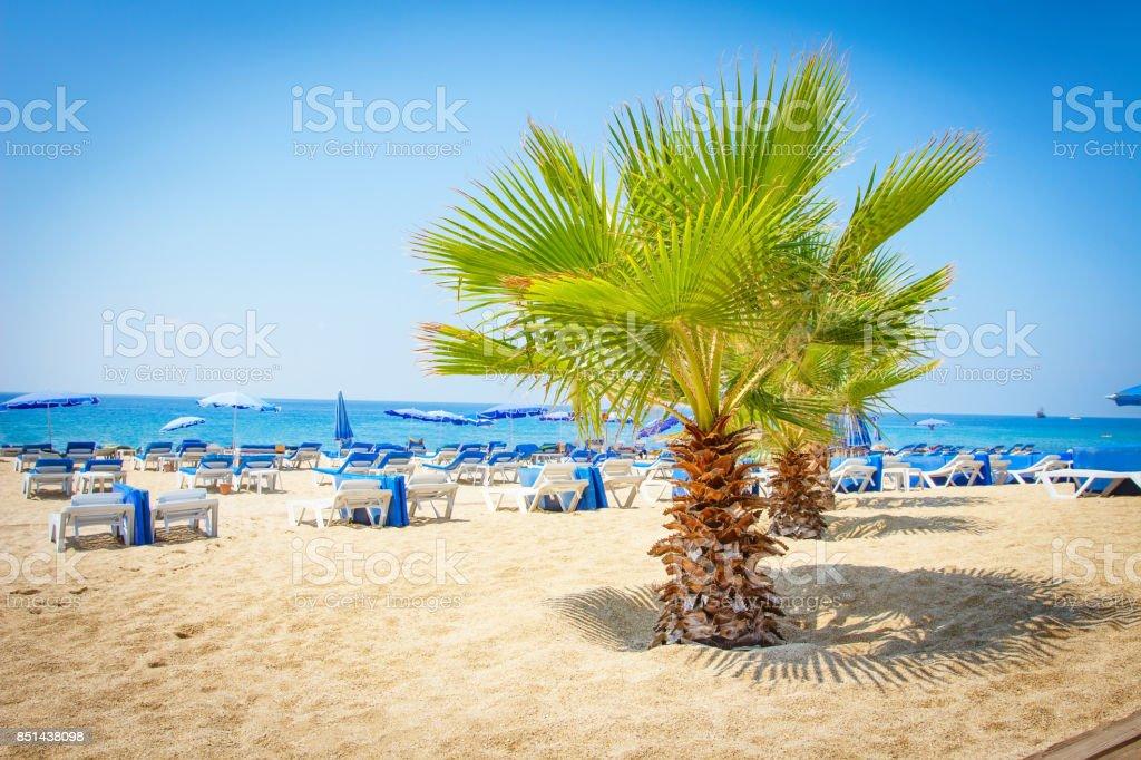 Palmiye ağacı, Alanya, Türkiye ile tropikal deniz plaj. Yaz plaj şezlong ve şemsiye ile. stok fotoğrafı
