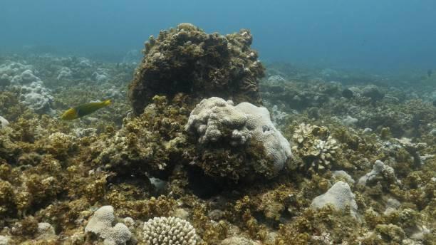 Tropical sea coral reef, Ogasawara Island, Japan stock photo