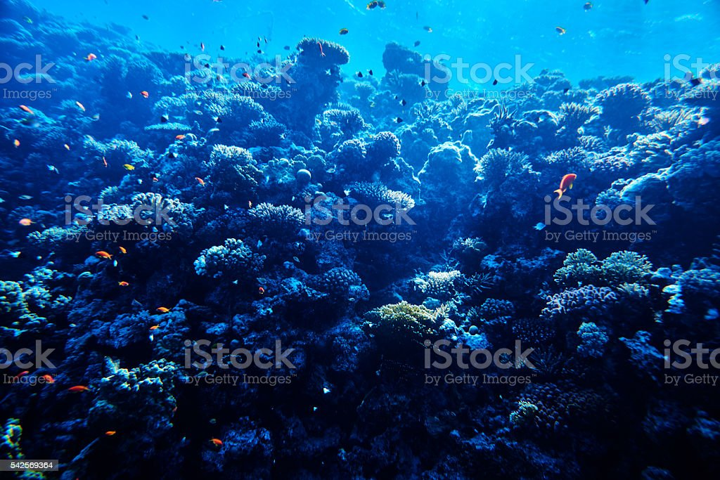 tropical sea life, soft coral stock photo
