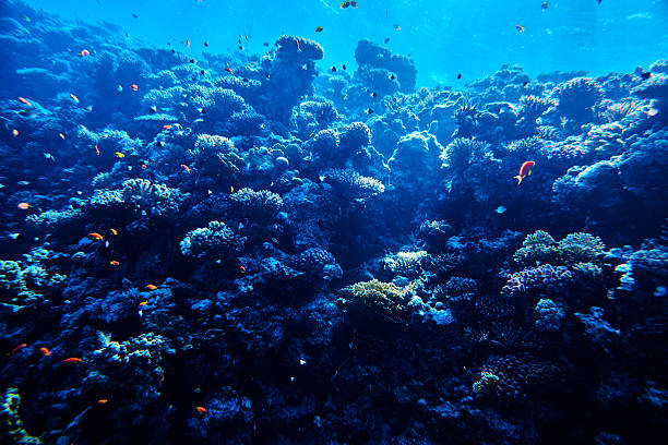 tropical sea life, soft coral - ocean floor stock photos and pictures