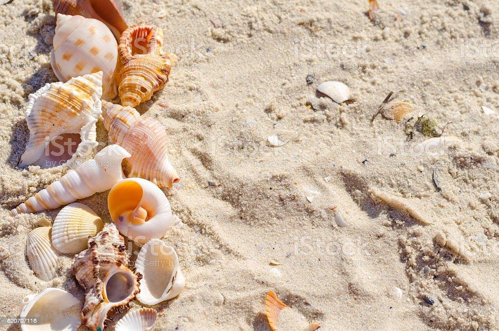 Tropical sea shells and sandy beach as background stok fotoğrafı
