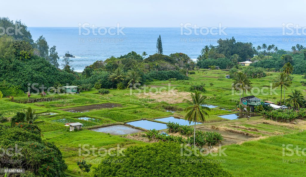 Tropical Seaside Farm stock photo