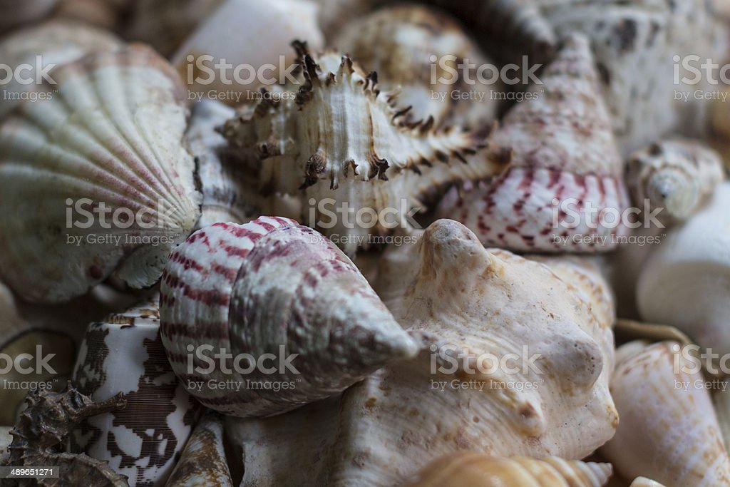 Tropical Sheels stock photo