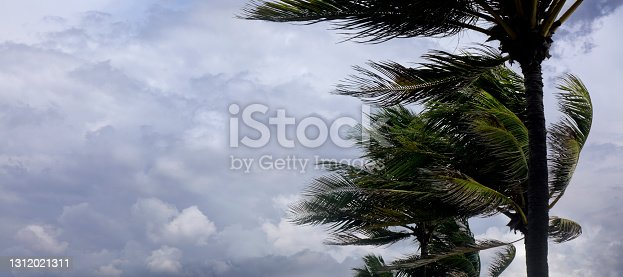 istock Tropical storm and palm trees leaf 1312021311