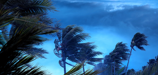 Palm tree leaves waving in windy tropical storm over dark clouds in Florida